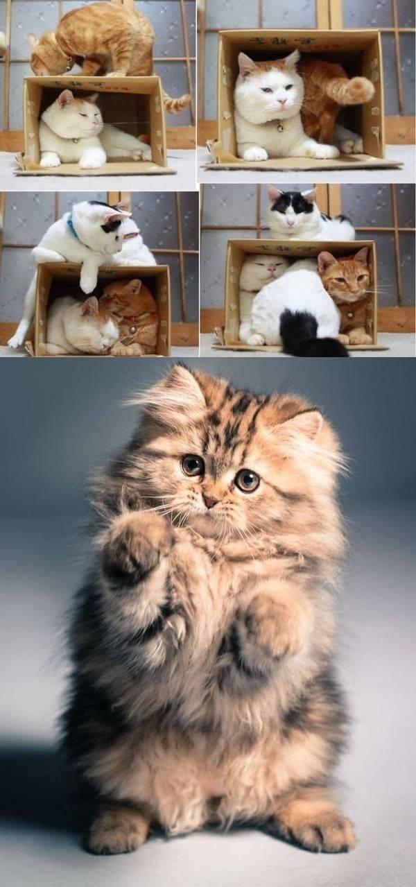 16 забавных котиков