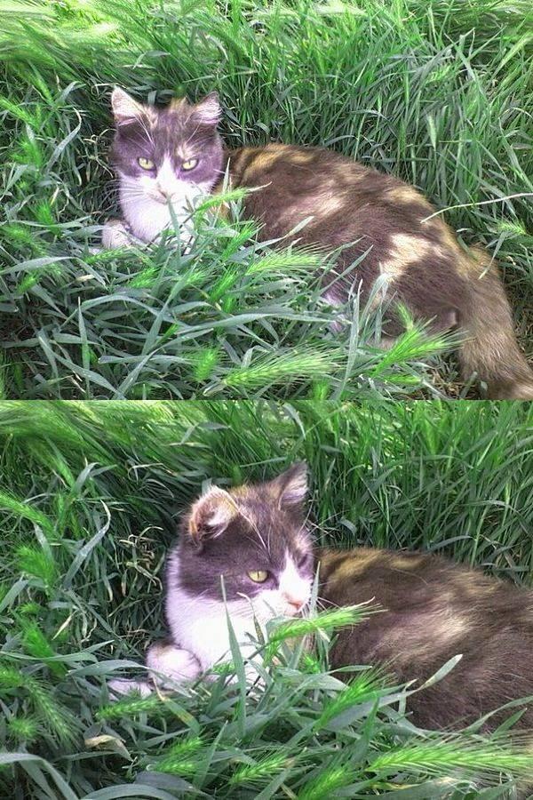 Ай, да Майя! История одной ну очень умной кошки