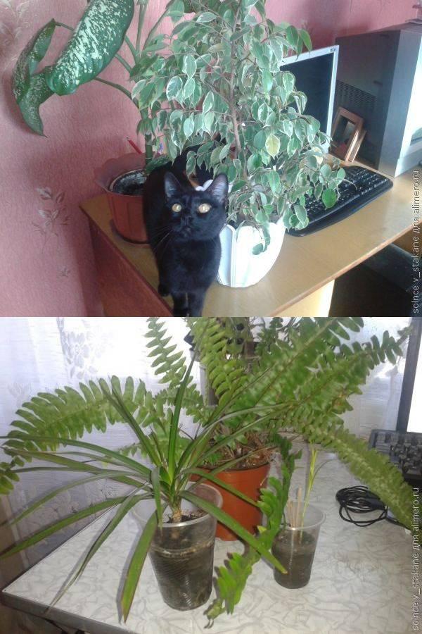 Квартирная флора