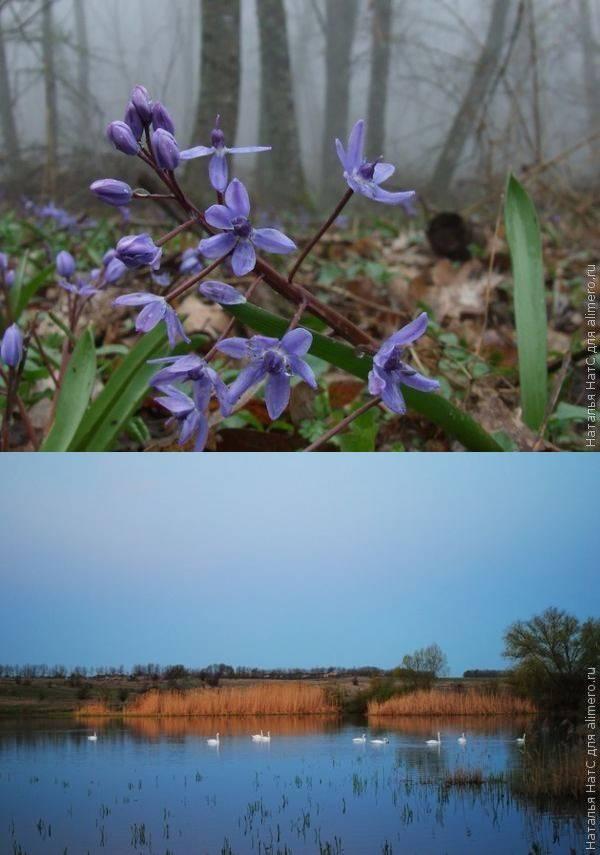 Наша первая вылазка на природу этой весной