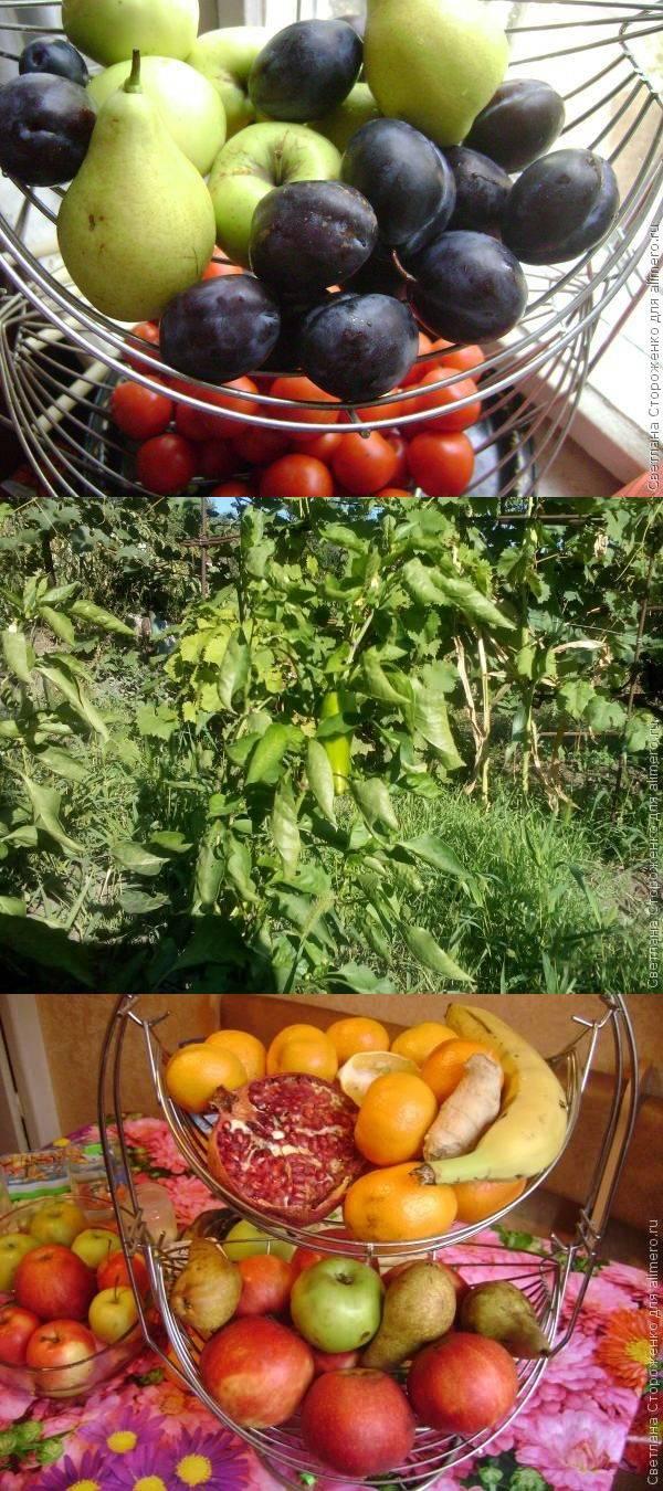 Ранние овощи. Есть или не есть?