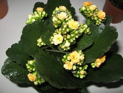 Цветы в киа рио фото цена