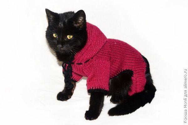 комбинезон с капюшоном для кошки мой мастер класс хенд мейд