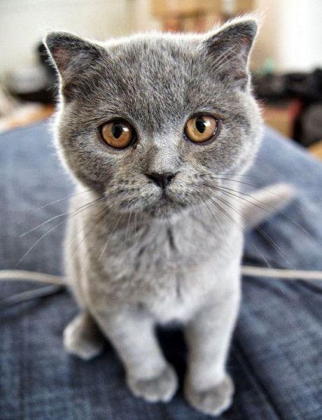 Чтобы нравится девочкам, надо быть умным, красивым, богатым или котом.