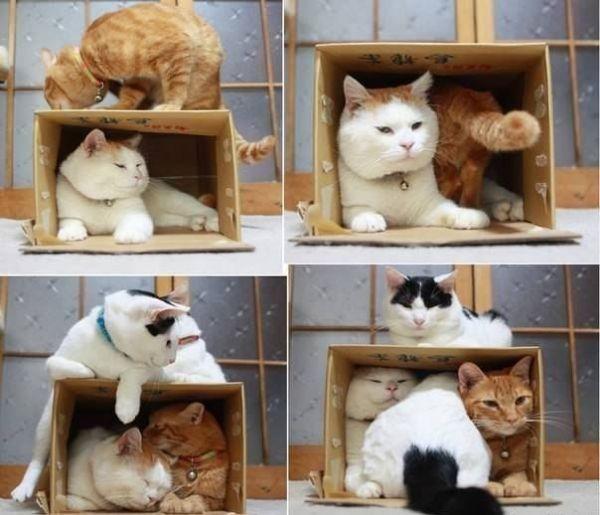 """Ничто не звучит так угрожающе для кошки как слова маленькой девочки """"Кисяяя"""""""