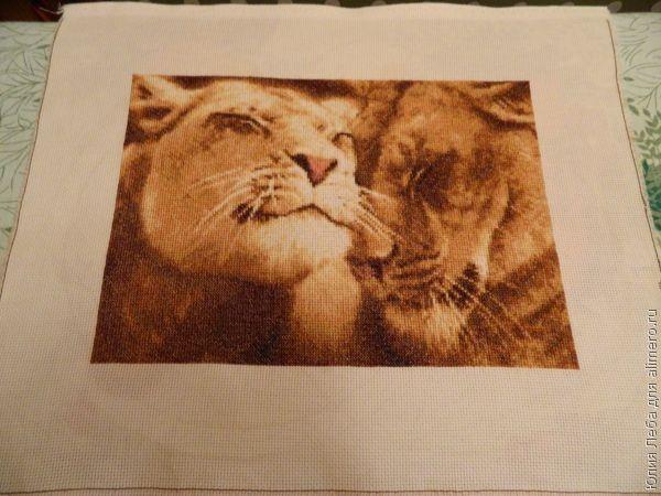 Влюблённые львы