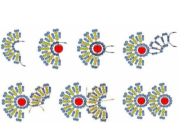 Используя эту схему можно сплести оригинальное украшение из бисера на шею, а также сделать браслет, серьги или даже перстень!