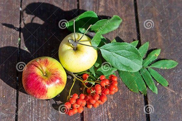 9. Яблоки с рябиной. Четыре порезанных мелким кубиком яблока, 200 г рябины и мед по вкусу соединить вместе и перемешать.