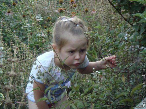 Безопасность детей на природе