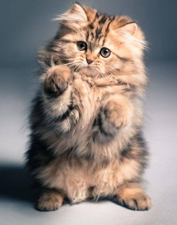 Женщины и кошки одинаковы: ты только думаешь, что ты ими владеешь.
