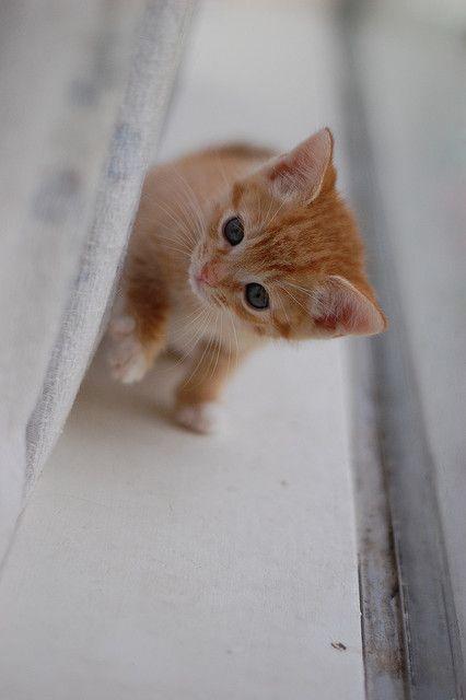 В доме, где есть кошка, других украшений не нужно /Уэсли Бэйтс/