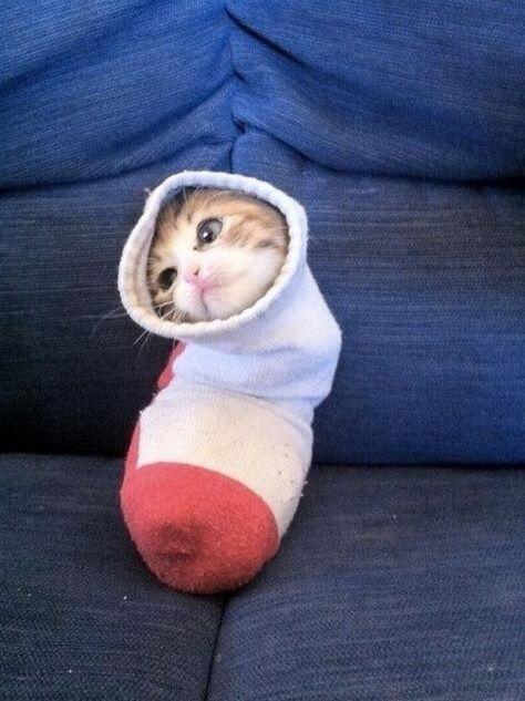 Единственная вещь, которую невозможно понять, — почему кошка когда-то решила стать домашним животным.   /Кларк МакКензи/