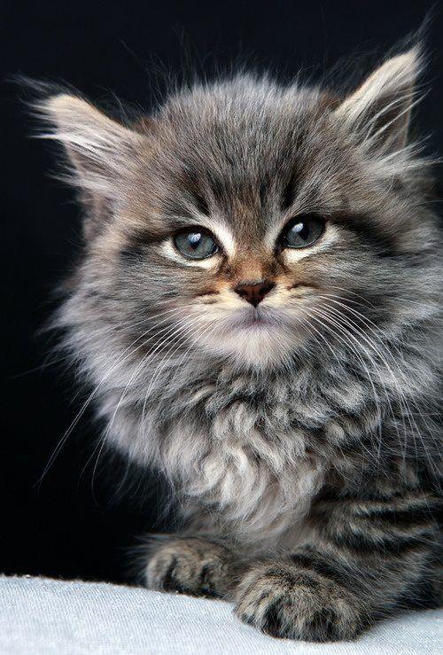 Даже самое маленькое из кошачьих — совершенство./Леонардо да Винчи/