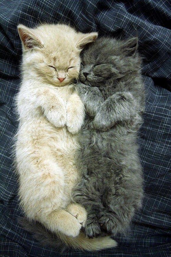 Кошка не против, чтобы вы спали в своей постели. На самом краешке. /Дженни де Вриз/