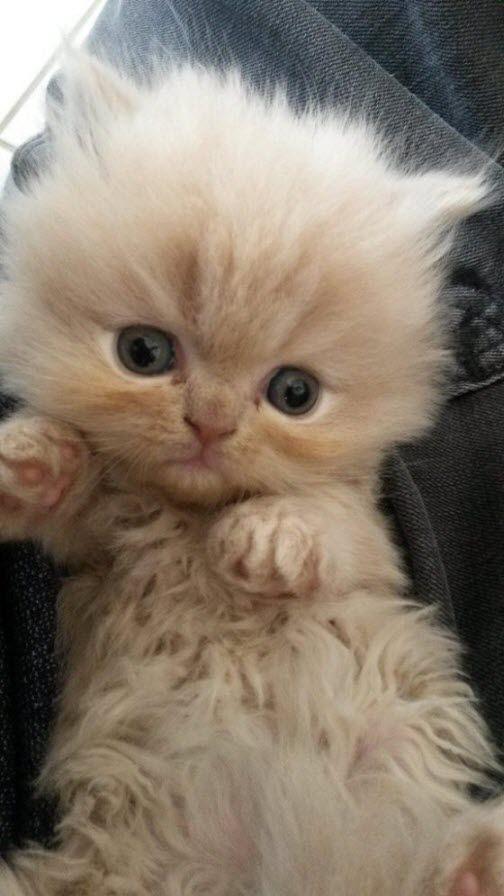 Только любители кошек знают, что такое всегда теплая, роскошная, меховая грелка. /Сюзанн Миллен/