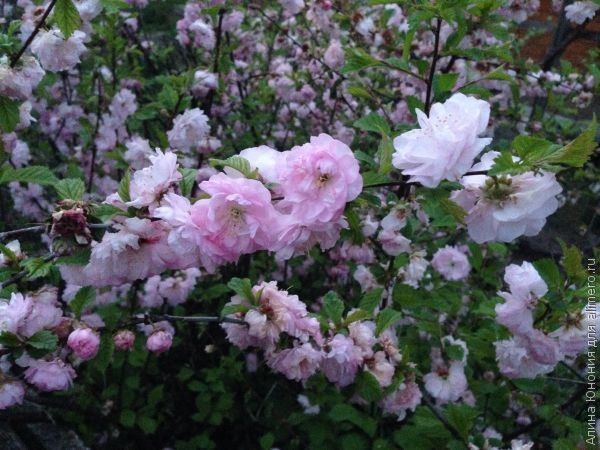 цветы весна