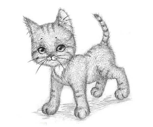 Рисуем животных поэтапно — 10 уроков