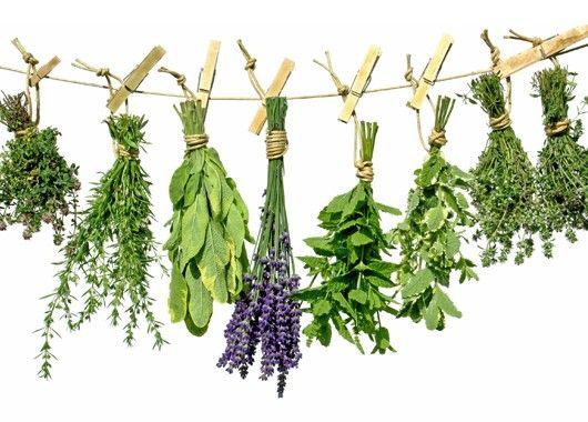Душистые травы вроде розмарина, шалфея, орегано, майорана, тимьяна лучше добавлять в начале готовки: так они успеют отдать максимум своего аромата. А вот петрушку, укроп, кинзу, зеленый лук, базилик и эстрагон оставьте на самую последнюю минуту. Иначе они потеряют свой цвет и нежный аромат.