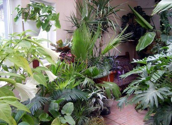 Мыло помогает справиться с тлей и другими садовыми вредителями. При этом, мыльный раствор совершенно безопасен для растений. Применять раствор можно не только в саду, но и для комнатных растений.