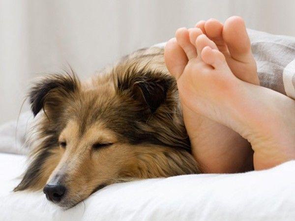Ваш пес или кот может быть невероятно милым и отзывчивым, но держать его в спальне нельзя. Ошибочно думать, что спящий кот навеет и вам сон. Ученые обнаружили, что люди, у которых в спальне присутствуют домашние животные, просыпаются, как минимум, один раз за ночь.