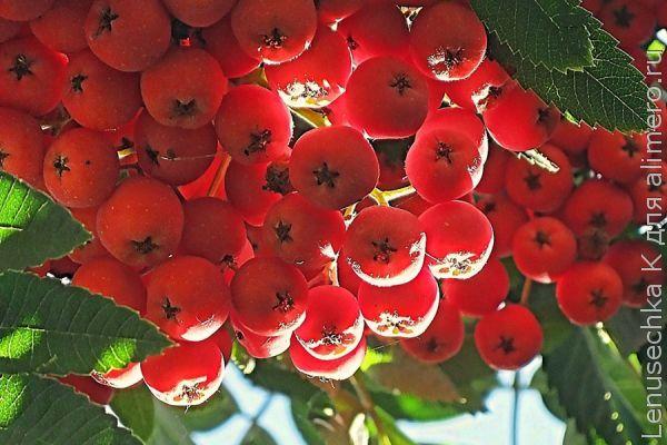 Забота о здоровье осенью