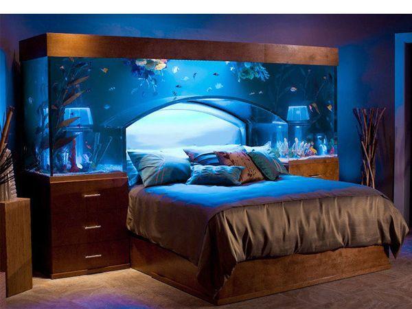 Настоящим украшением дома аквариум станет, если грамотно организовать жизненное пространство для рыбок и обеспечить им регулярный уход.