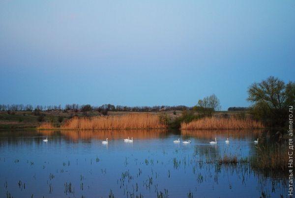 озеро лебеди