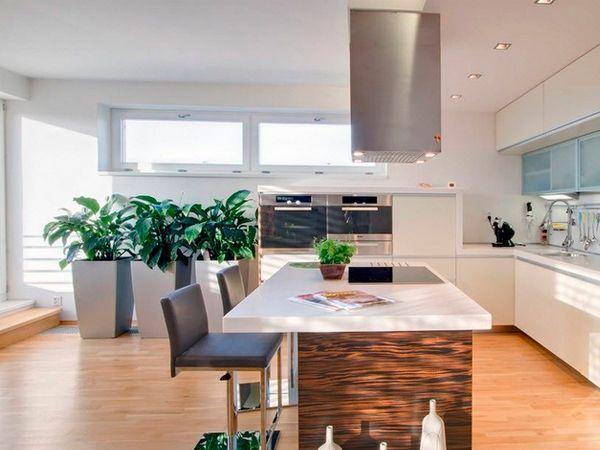 Комнатные растения в интерьере кухни, идеи.