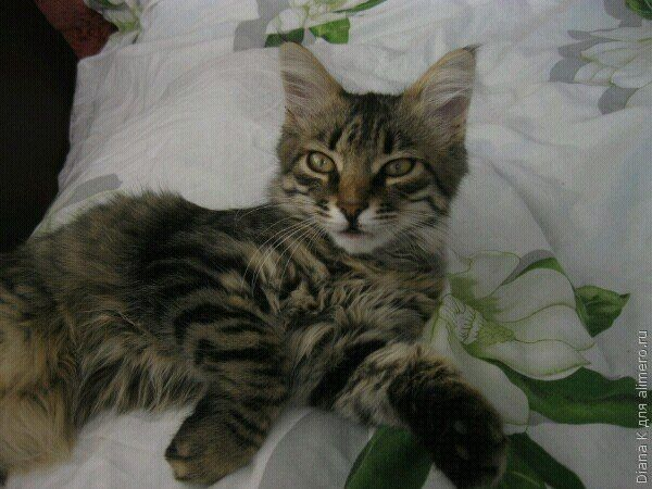 Ночной сюрприз или у нас появился котенок
