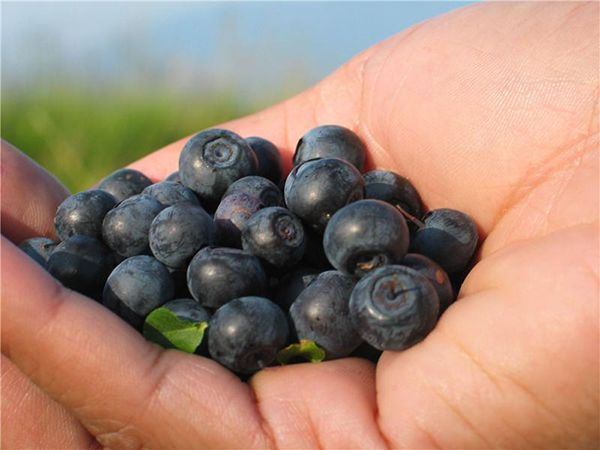 Не пренебрегайте различными фруктами, ягодами и овощами, особенно сезонными и местными. Они богаты витаминами и полезными веществами и должны присутствовать в рационе в больших количествах.