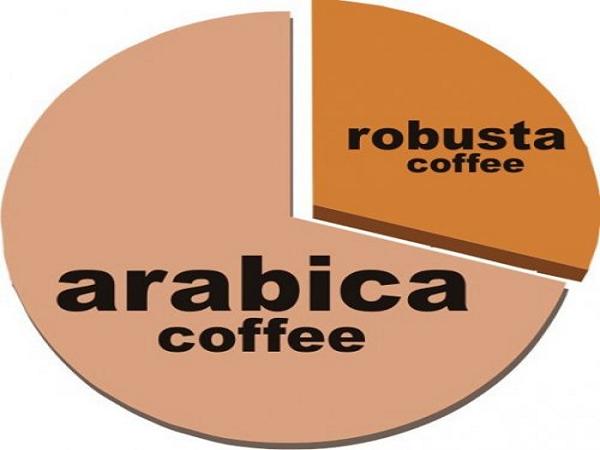 Существует более 50 видов кофе по всему миру. Однако только 2 из них используются в коммерческом производстве кофе. 70% людей в мире пьют кофе Арабику, который отличается мягким вкусом и сильным ароматом. Оставшиеся 30% пьют кофе Робуста, который обладает более горьковатым вкусом, и в котором на 50 процентов больше кофеина.