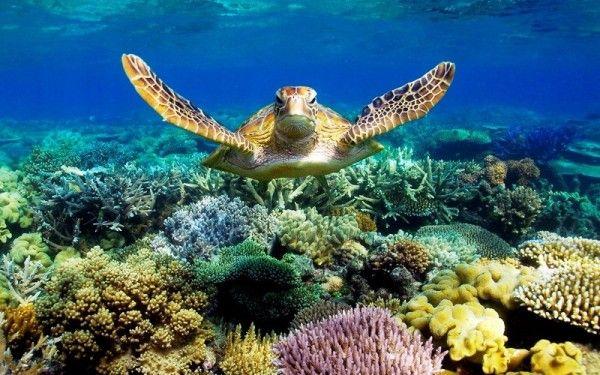 1. Большой Барьерный Риф, Австралия. Риф является самым большим на Земле природным объектом, образованным живыми организмами - его можно увидеть даже из космоса. Подводный мир Рифа уникален и больше похож на красочную иллюстрацию к какой-то сказке, ведь здесь на фоне коралловых садов и растений всех цветов радуги, спокойно плавают крупные косяки таких же разноцветных рыб.