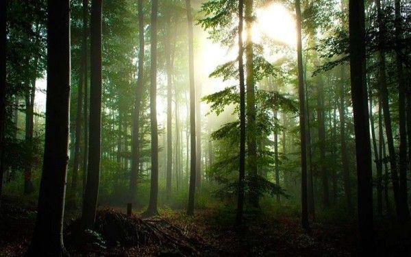 26. Черный лес Шварцвальд, Германия. Шварцвальд - это тот самый Черный лес, куда за приключениями ходили герои братьев Гримм и Гауфа. Эти сказки дышат чудесами Шварцвальдского леса, как и он помнит страшных ведьм, сказочных лесовиков и гномов. Склоны гор в Шварцвальде поросли темными елями, поэтому он и называется черным.