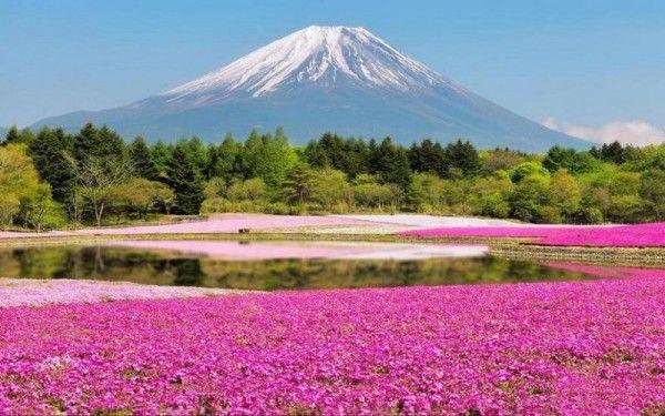 27. Парк Хицужияма, Япония. О красоте японской природы можно говорить бесконечно долго. Тихая гармония суровых горных пейзажей и умопомрачительная цветовая россыпь на равнинах создают просто восхитительный эффект. Каждую весну площадь около 17,6 тысяч м2 полностью покрывается потрясающе красивым цветочным ковром.