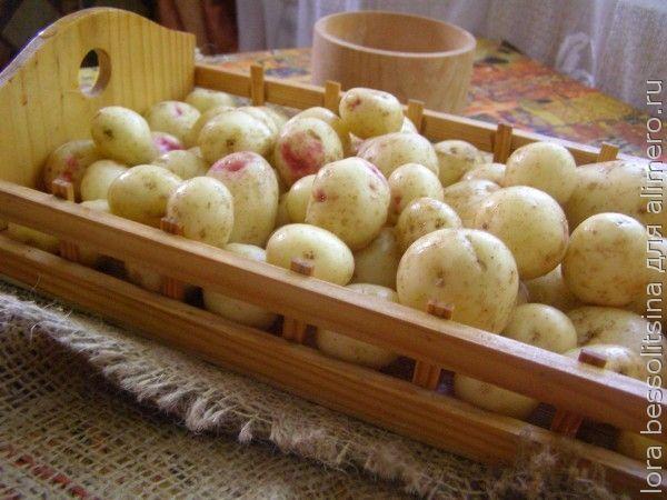 молода картошка, подготовим