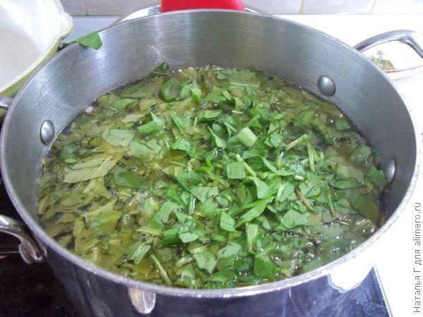 Зеленый борщ с щавелем и рисом