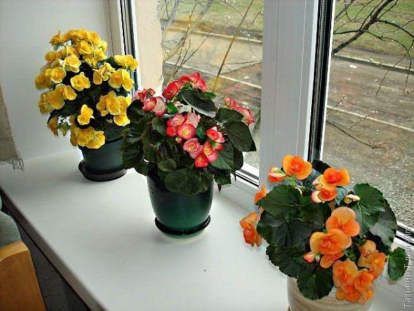 Головной убор из цветов своими руками