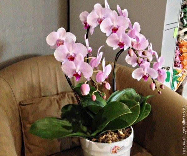 Комнатные цветы с орхидея
