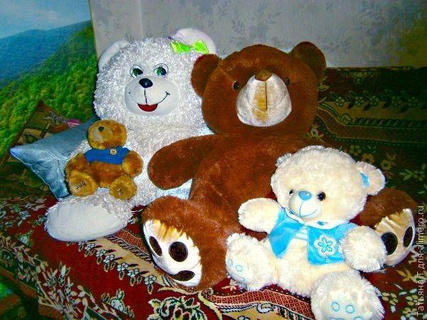 Наши домашние медведи