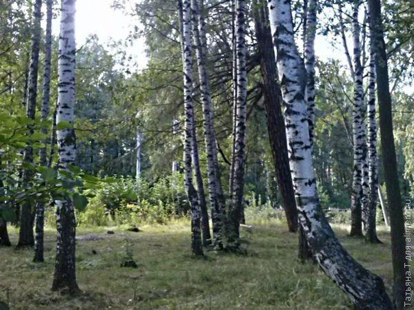 Целебная сила деревьев