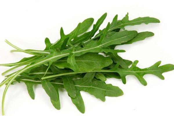 Руккола растение рода салатов. У нее своеобразный мягкий вкус и приятный аромат. В уходе она не слишком прихотлива, прохладное местечко на окошке или закрытом балконе – то, что нужно.