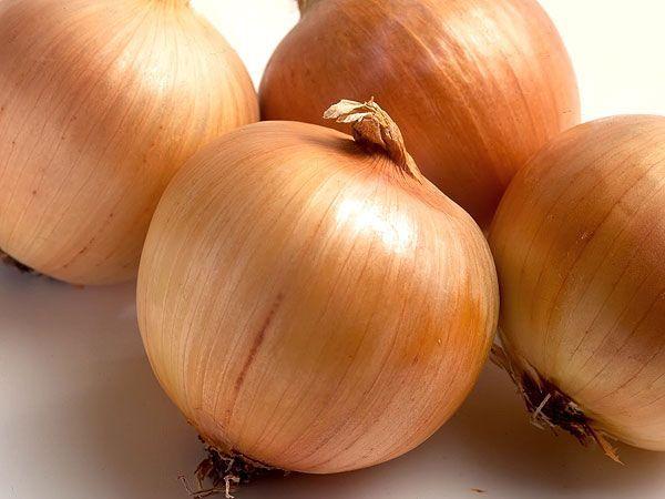 Зеленые перья репчатого лука замечательно дополняют овощные супы и различные салаты. А  для посадки не обязательно использовать целые луковички. Можно посадить во влажный грунт только донце с корнями.