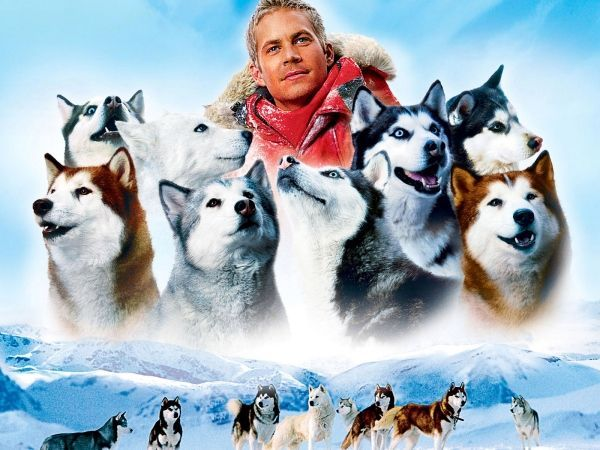 «Белый плен». Фильм о выживании 8-ми ездовых собак в суровых условиях антарктической зимы. Оно попали в ловушку, но смогли продержаться целых полгода. Правда, двое спасения так и не дождались.