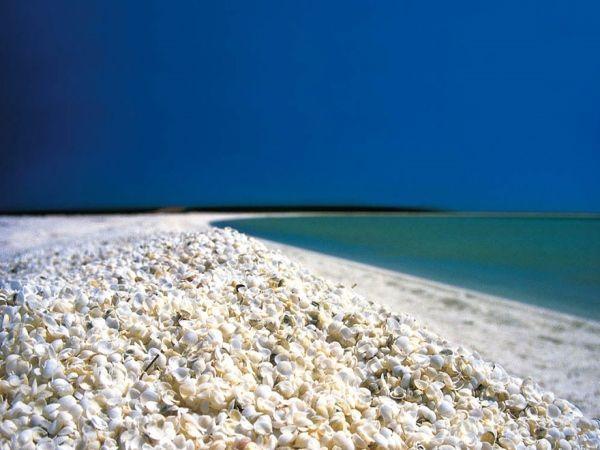 Пляж Шелл-Бич, или проще – ракушечный пляж. Он расположен в Акульем заливе Шарк, в  Австралии. Благодаря очень соленой воде в заливе, моллюски размножаются очень быстро.