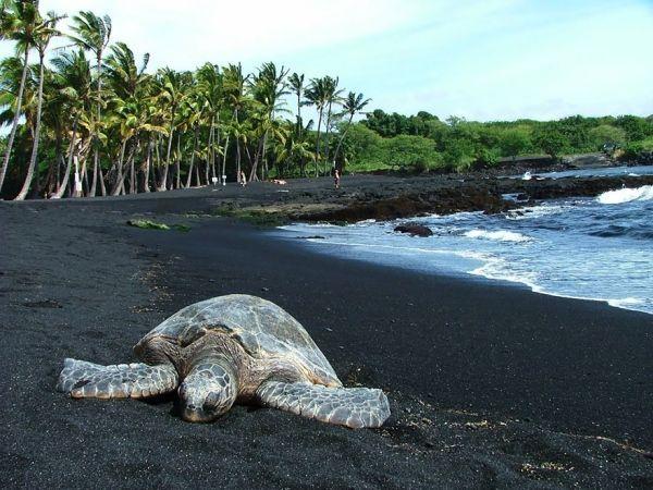 Гавайи.  Пляж Пуналуу с черным песком. На этом пляже черный песок образуется в результате выброса лавы и её быстрого охлаждении в море. Очень необычное зрелище.