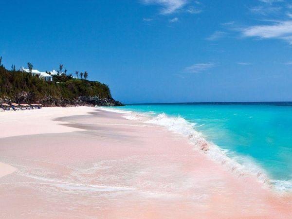 Розовые песчаные пляжи Бермуд. Песок такого оттенка очень редко встречается в природе. А образовался он из остатков раковин моллюсков и скелетов беспозвоночных.