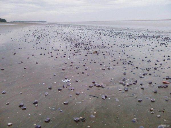 Индия.  Пляж Чандипур уникален тем, что дважды в день, во время отлива, море буквально на глазах у зачарованных туристов отходит почти на 5 км.