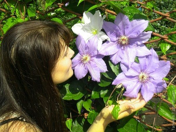 девушка цветы фото