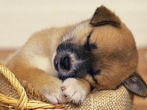 Спи моя радость, усни.