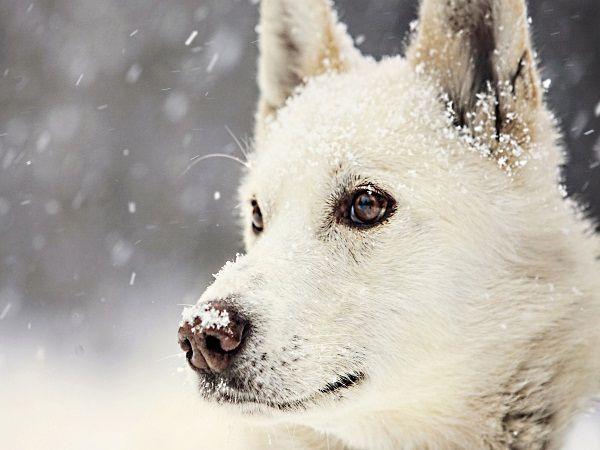 А снег идет, а снег идет. А верный пес кого-то ждет.